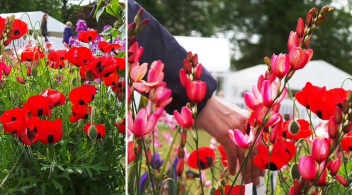 Holker Garden Festival |Plants for sale
